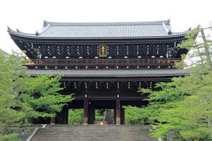 5月,新緑の知恩院三門の写真素材 [FYI03877280]