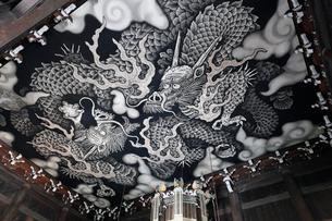 5月,建仁寺の法堂天井画「双龍図」の写真素材 [FYI03877284]