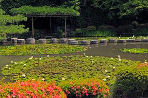 5月 平安神宮神苑の花菖蒲とサツキの写真素材 [FYI03877302]