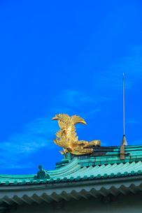 名古屋城・金鯱の写真素材 [FYI03877460]