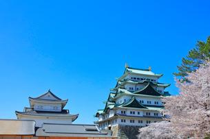 春の名古屋城 大天守と小天守に桜の写真素材 [FYI03877463]
