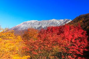 秋の大山・冠雪に紅葉と快晴の空の写真素材 [FYI03877465]
