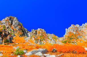 秋の中央アルプス千畳敷カール 紅葉と快晴の空の写真素材 [FYI03877470]