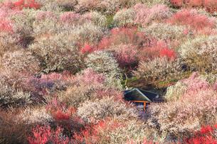 いなべ市農業公園 花咲く梅林公園の写真素材 [FYI03877479]