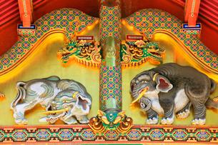 日光東照宮 上神庫に想像の象の写真素材 [FYI03877553]