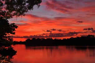 世界遺産パンタナル自然保護地域の朝焼けの写真素材 [FYI03877677]