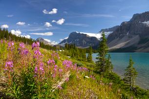カナディアンロッキーの花と湖の写真素材 [FYI03877694]