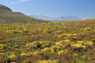 世界遺産ケープ植物区保護地域群の写真素材 [FYI03877704]
