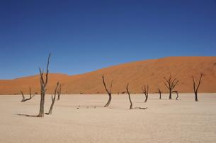 世界遺産ナミブ砂漠デッドフレイ(死の沼地)の写真素材 [FYI03877707]