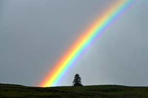 ランギトト島で現れた虹の写真素材 [FYI03877739]