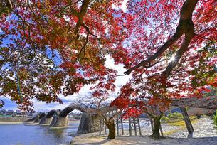 錦帯橋の秋の写真素材 [FYI03877758]