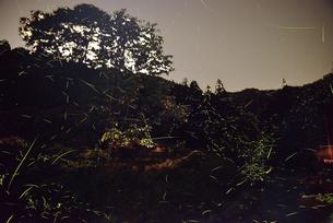 御杖村のゲンジ蛍の写真素材 [FYI03877771]