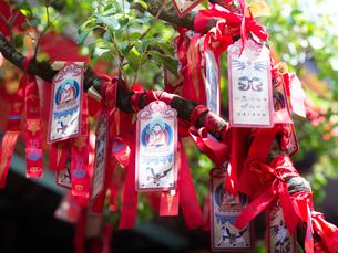 中国 雲南省 三朶節 木にくくられた札の写真素材 [FYI03878118]