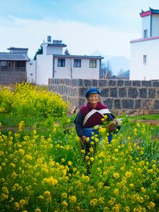 中国 雲南省 菜の花に立つナシ族の女性の写真素材 [FYI03878122]