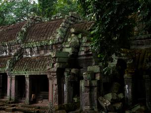 カンボジア シェムリアップ タ・プロームの写真素材 [FYI03878183]
