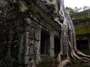 カンボジア シェムリアップ タ・プロームの写真素材 [FYI03878184]