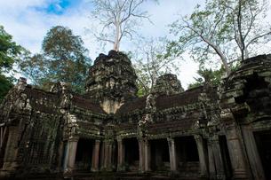 カンボジア シェムリアップ タ・プロームの写真素材 [FYI03878186]