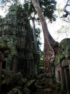 カンボジア シェムリアップ タ・プロームの写真素材 [FYI03878187]