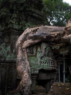 カンボジア シェムリアップ タ・プロームの写真素材 [FYI03878188]