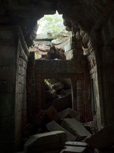 カンボジア シェムリアップ タ・プロームの写真素材 [FYI03878189]