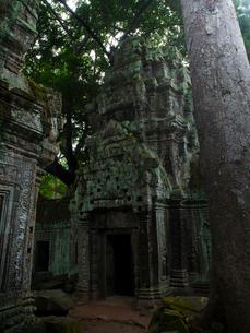 カンボジア シェムリアップ タ・プロームの写真素材 [FYI03878190]