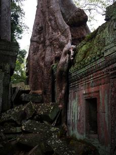 カンボジア シェムリアップ タ・プロームの写真素材 [FYI03878191]
