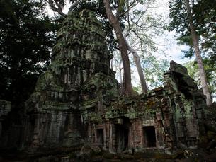 カンボジア シェムリアップ タ・プロームの写真素材 [FYI03878192]
