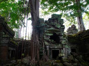 カンボジア シェムリアップ タ・プロームの写真素材 [FYI03878193]