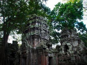 カンボジア シェムリアップ タ・プロームの写真素材 [FYI03878194]