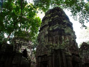 カンボジア シェムリアップ タ・プロームの写真素材 [FYI03878197]