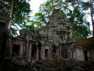 カンボジア シェムリアップ タ・プロームの写真素材 [FYI03878198]