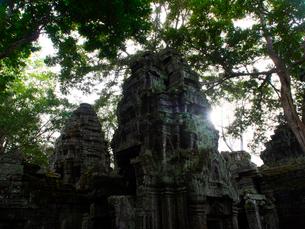 カンボジア シェムリアップ タ・プロームの写真素材 [FYI03878199]