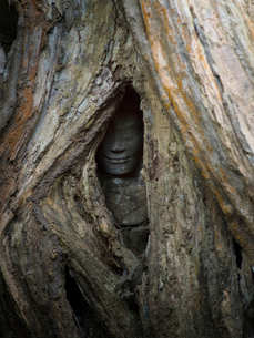 カンボジア シェムリアップ タ・プロームの写真素材 [FYI03878200]