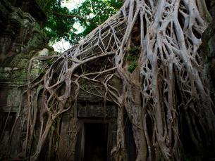 カンボジア シェムリアップ タ・プロームの写真素材 [FYI03878204]