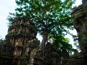 カンボジア シェムリアップ タ・プロームの写真素材 [FYI03878208]