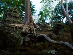 カンボジア シェムリアップ タ・プロームの写真素材 [FYI03878209]