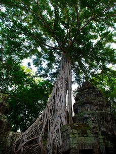 カンボジア シェムリアップ タ・プロームの写真素材 [FYI03878212]