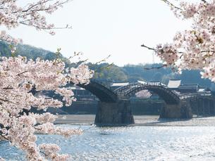 山口 錦帯橋の桜の写真素材 [FYI03878230]