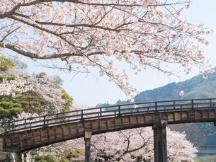 山口 錦帯橋の桜の写真素材 [FYI03878233]