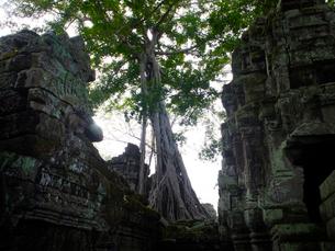 カンボジア シェムリアップ タ・プロームの写真素材 [FYI03878242]