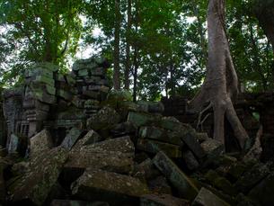 カンボジア シェムリアップ タ・プロームの写真素材 [FYI03878243]