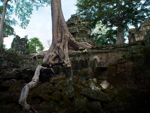 カンボジア シェムリアップ タ・プロームの写真素材 [FYI03878248]