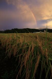 新潟の棚田と虹の写真素材 [FYI03878413]