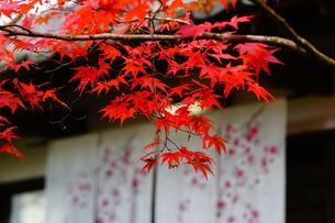 紅葉とお茶屋さんの写真素材 [FYI03878468]