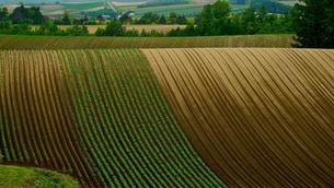 北海道美瑛の畑の写真素材 [FYI03878509]
