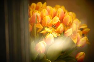 花屋さんのショーウインドウの写真素材 [FYI03878525]