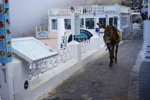 サントリーニ島のロバの写真素材 [FYI03878735]