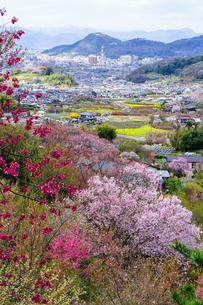 花見山からの眺めの写真素材 [FYI03878790]