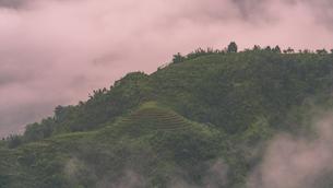 ベトナム サパの棚田の写真素材 [FYI03878792]