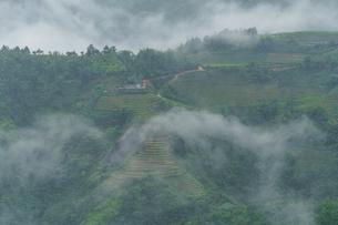 ベトナム サパの棚田の写真素材 [FYI03878794]